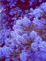 NZで一番気に入った花