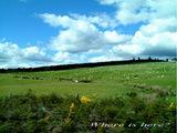 草原の白い点々は羊