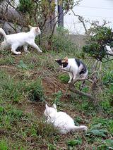 子猫の遊び