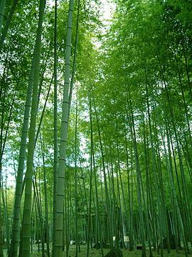 竹の生産地〜
