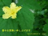 ゴーヤの花はかわいい