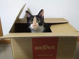 ブルックスの箱が