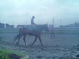 馬も乗れました