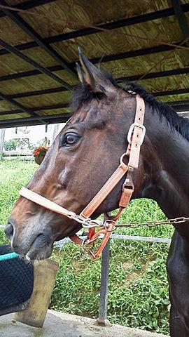最初の馬は確か・・・。