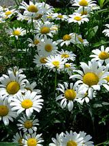 花も涼しそう