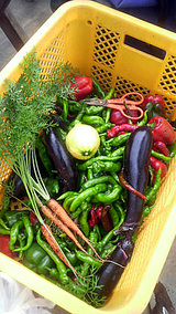 まだ採れる野菜。