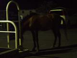これは逃亡してきた馬(沖縄で)