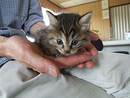 子猫大きくなりました