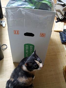 お目当ては箱