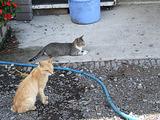 きままな猫たち