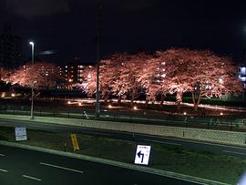 駅前の桜だけ