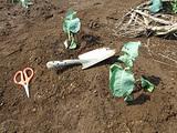 サウナの中で苗定植する
