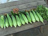 初、収穫!!