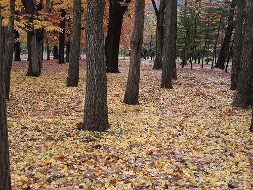 落ち葉絨毯