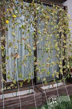 Green-curtain puroject 2012_1005_03