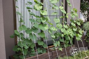Green-curtain puroject2012_0714