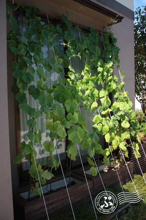 Green-curtain puroject 2012_0807