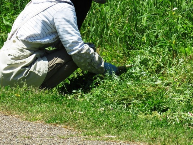 草むしりは孤独との闘い