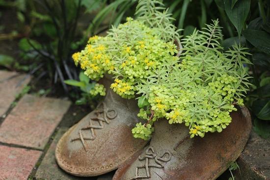 靴にセダム