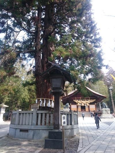 諏訪大社(秋宮)3197