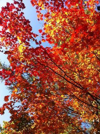 照葉峡散策 紅葉