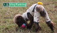 犬ブログランキング