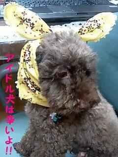 アイドル犬は辛いのぉ〜