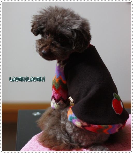 トイプードル ゆず 犬服
