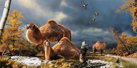北極圏で350万年前のラクダ化石発見
