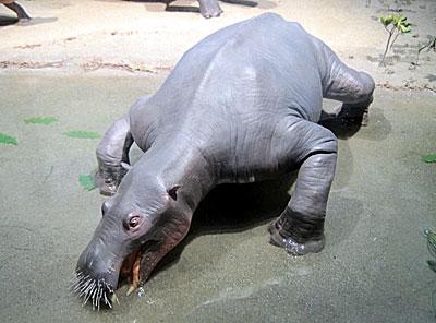謎の絶滅哺乳類「デスモスチルス」