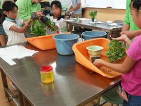 大久保小環境教室5