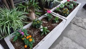 土合中20170906花植え活動4