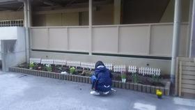 20200312花植え1