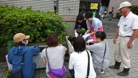 土合中20170906花植え活動3