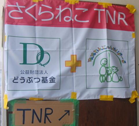 沖縄市中央TNR3.