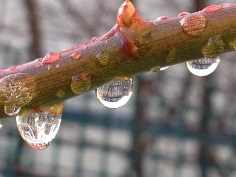 くれ ない の 二 尺 伸び たる 薔薇 の 芽 の 針 やわらか に 春雨 の ふる 意味 くれなゐの二尺のびたる薔薇の芽の針やはらかに春雨の降る/正岡子規他...