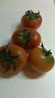 トマト72