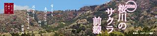 桜前線バナー
