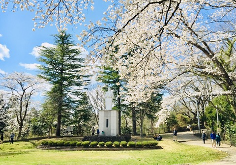 image岩出山城址の桜-20210410-5