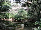 昭和美術館池から南山寿荘を望む