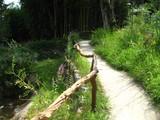ぬくもりの森登り道