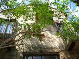 ドゥソールと百日紅の木