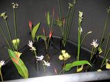 リリアーヌ入口の花