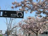 桜山八重桜桜山駅看板前