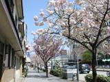 桜山八重桜山内前〜桜見町