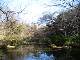 根津美術館庭園2