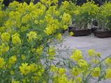 フラワーパーク花4
