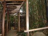 昭和美術館竹やぶのある通路