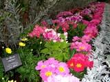 フラワーパーク花2