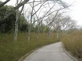 緑化センター桜とゆきやなぎ
